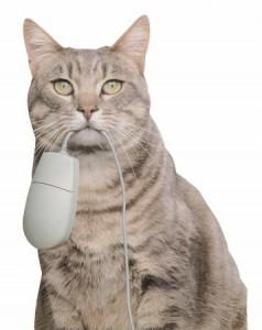 Gato-caza-raton